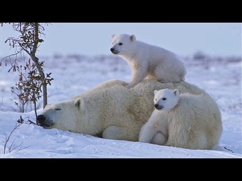 A Moment of Sweetness with a Bear Family!