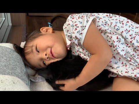 娘からの重すぎる愛情を拒否する猫 ラガマフィン A cat that fights back against too heavy love from her daughter(娘)
