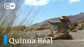 El grano madre de los Andes