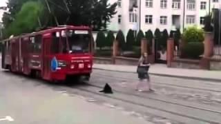 Очень спокойная собака на дороге / Very calm dog
