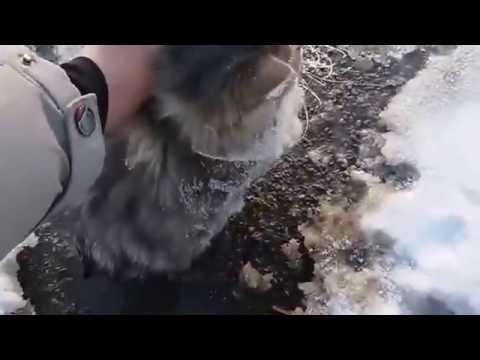 Спасение вмерзшей в землю кошечки