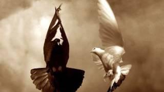 Weltraumstaunen - Black Dove Part I