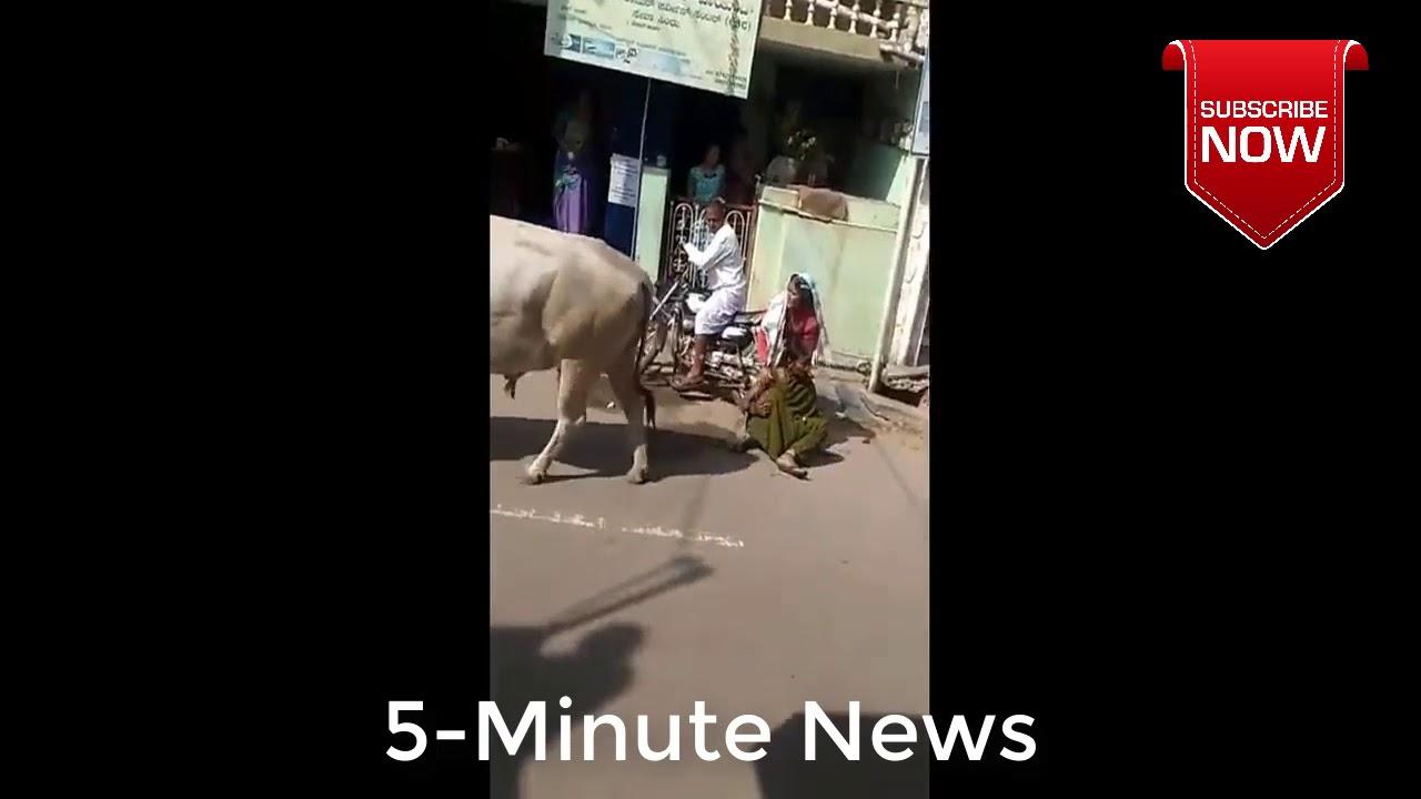 Бык сбил женщину на мотоцикле