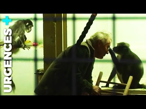 Vétérinaire : Animaux sauvages (1/2) - Documentaire