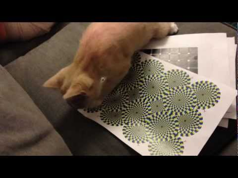 My Cat Can See The Rotating Snake Illusion!