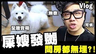 【Vlog】屎嫂發嬲,我連間房都無埋?! 😭Horlick全力賣萌演出