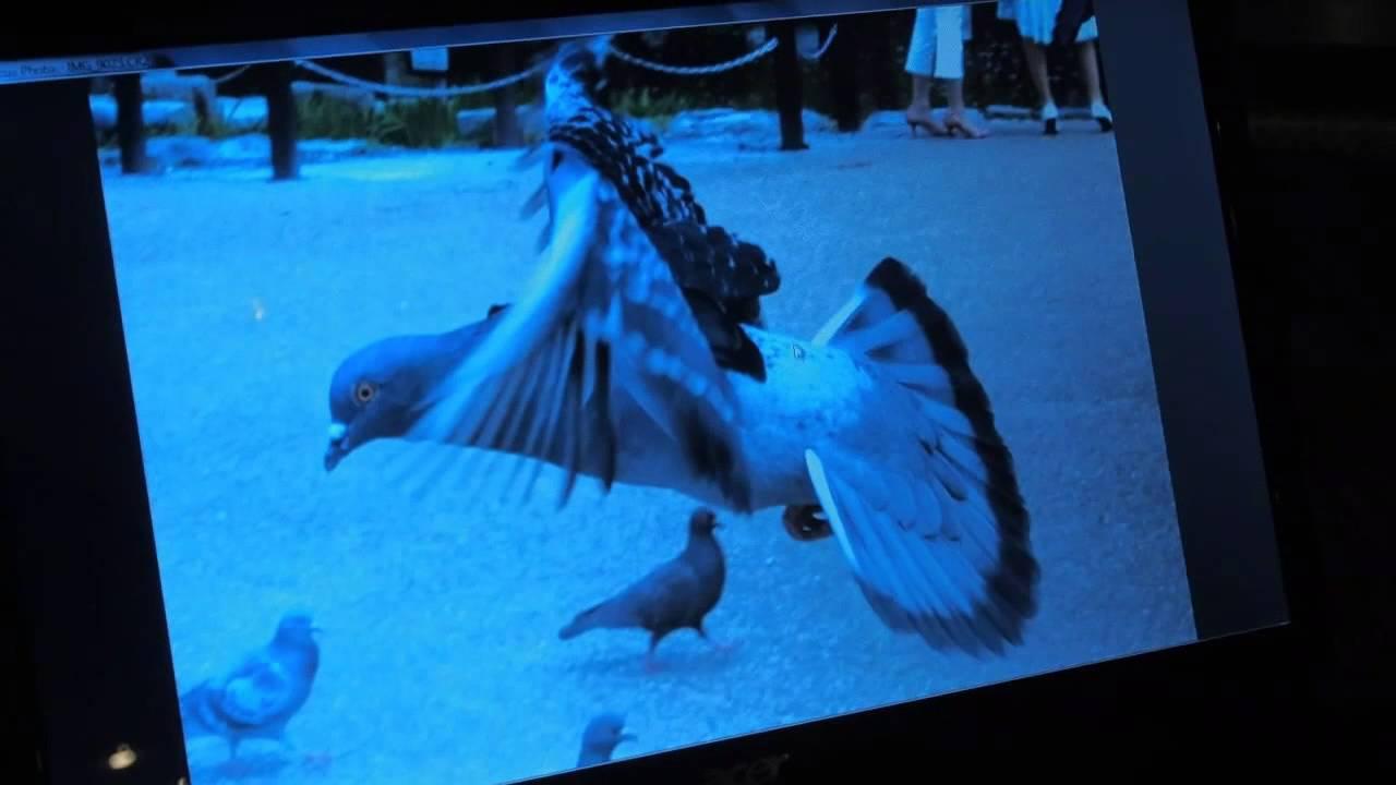3D Photos Are Coming To The Lytro Camera Really Soon