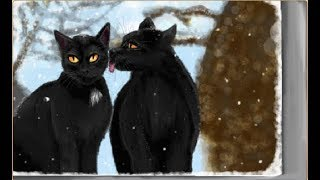 AJSP | Bombay Cats