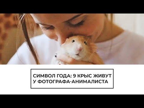 """Фотограф и """"мама"""" для 9 крысят"""