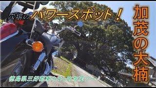 加茂の大楠国の特別天然記念物パワースポットツーリング徳島県東みよし町へ行ってきた!神々しい精気に満ちた巨木でした♪モトブログspiritualplace