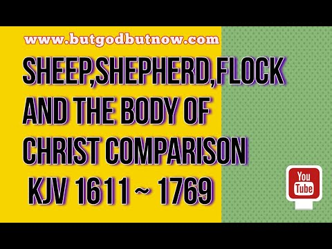 Sheep,Shepherd,flock and THE BODY OF CHRIST comparison
