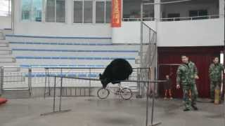 preview picture of video 'Ryosuke @ Hangzhou Zoo, Hangzhou, China'