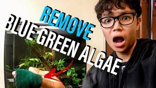 How to Remove Blue Green Algae (Cyanobacteria) From Aquarium