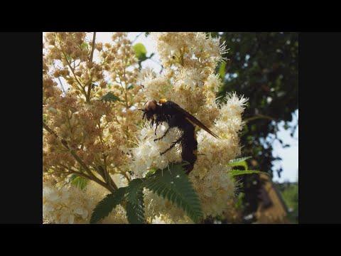 A pinworms és az ascaris közötti különbség