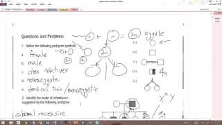 Answers - Pedigree Analysis Worksheet