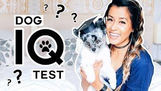 TESTING MY DOG'S INTELLIGENCE! Pet IQ Test W Samson   Ariel Hamilton