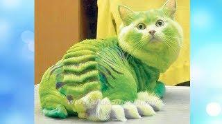 Приколы с котами и смешная озвучка животных #13 - навсегда сохранить улыбку на лице