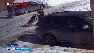 Смотреть онлайн Собака нападает на двоих детей