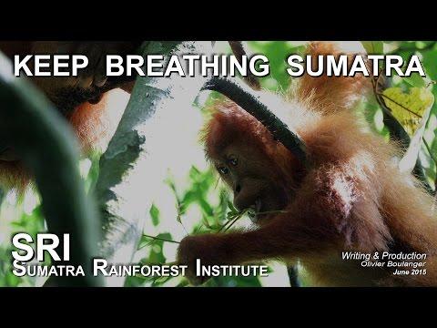 Tapanuli's Orangutan Conservation Project (TOCOP)