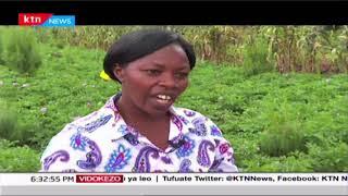 Kilimo cha viazi nchini Kenya -[Sehemu ya I] - | KILIMO BORA
