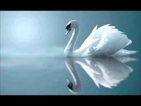 Мелодия Белого Лебедя