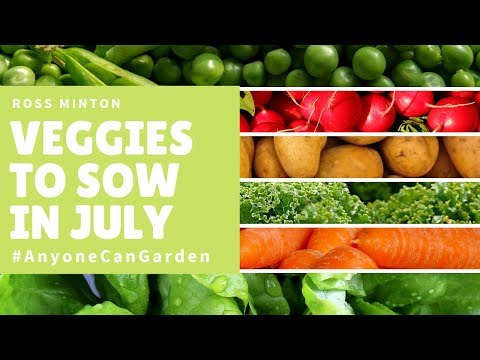 What to plant in July - What veg to plant now - Gardening ideas - vegetable gardening