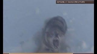 вам охота на волков
