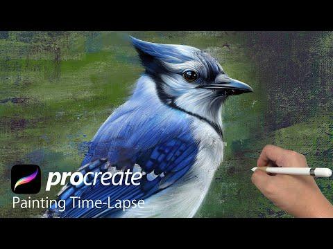 digital art ipad pro procreate painting blue jay bird time lapse by vincent chu