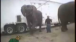 Bailey Bros. Elephant Abuse