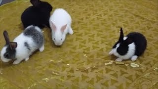how to care baby rabbits