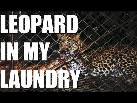 Fieldsports Britain – Hunting oryx and a leopard in the laundry,  episode 130
