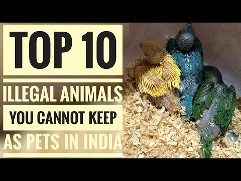, title : 'Top 10 Illegal Animals You Cannot Keep As Pets In India.   Part - 1.
