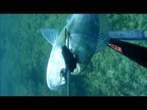 Canzoni su pesca di sequenze video