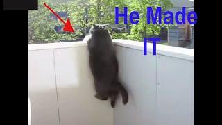 Funny Fat Cats, Fat Cats Cant Jump 🐱🐱🐱
