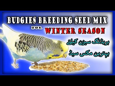How to save birds in winter season new / Budgies Winter Food