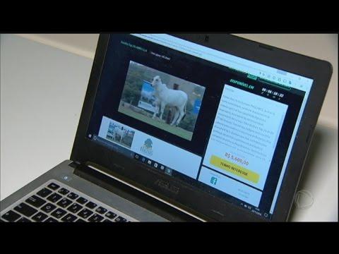Black Friday 2016 tem até venda de gado pela internet