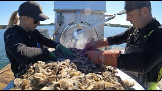 The Story of Bar Harbor Oyster Company