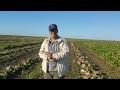 Film Realisé Par La Sucrerie Cosumar Au Maroc Dans