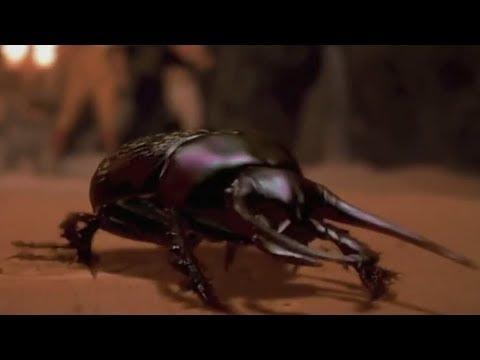 Flesh-Eating Scarab Beetles Compilation -The Mummy