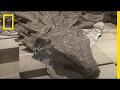 Dinosauruksen fossiili