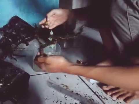 Video cara menanam moss di akarnya