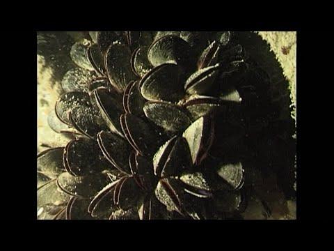 Hogyan távolítsuk el a szalagféregeket