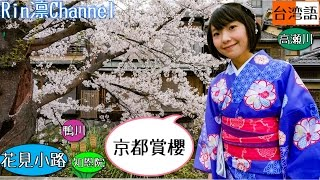 京の桜と着物と台湾