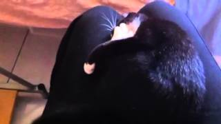 Charlie fighting... an itch? - Video Youtube
