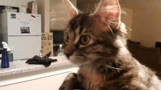 Смешные и забавные животные, Hat cat