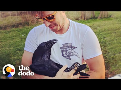 Raven Shakes His Tail Feathers Every Time He Sees Dad | The Dodo