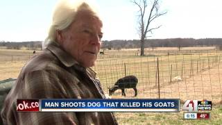 Woman cited after loose dogs kill goat in Smithville