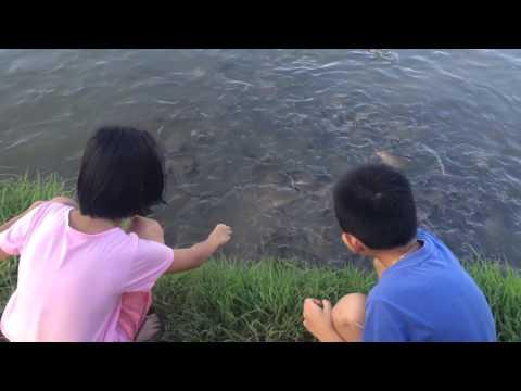 น้ำทะเลเมื่อ thrombophlebitis