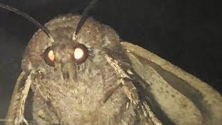 moth love lamp