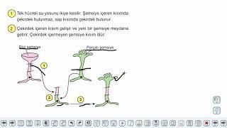 Eğitim Vadisi 9.Sınıf Biyoloji 12.Föy Hücre İçi Organizasyon Konu Anlatım Videoları